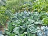 Last year's garden